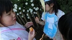 ★川越市 幼稚園CIMG1155