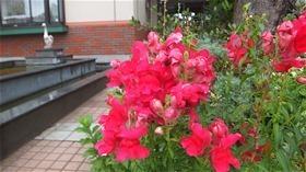 ★川越市 幼稚園DSCF5612