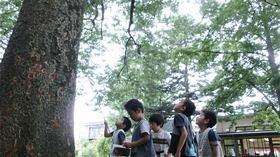★川越市 幼稚園CIMG5459