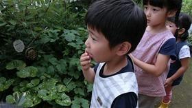 ★川越市 幼稚園CIMG6319