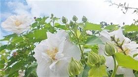 ★川越市 幼稚園DSCF6687