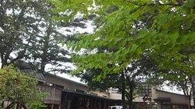 ★川越市 幼稚園DSCF7388