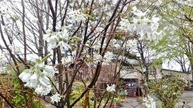 ★幼稚園@川越市・ふじみ野市・さいたま市DSCF3671