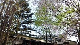★幼稚園@川越市・ふじみ野市・さいたま市DSCF3754