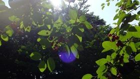 ★幼稚園@川越市・ふじみ野市・さいたま市DSCF0347