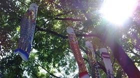 ★幼稚園@川越市・ふじみ野市・さいたま市DSCF4298
