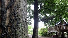 ★幼稚園@川越市・ふじみ野市・さいたま市DSCF6333